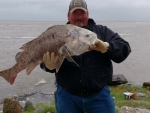 Lance_McBurnett_fish-black-drum.jpg