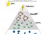 Isabel Young, Flounder Food Pyramid